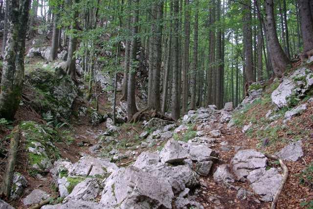 las w Alpach Julijskch