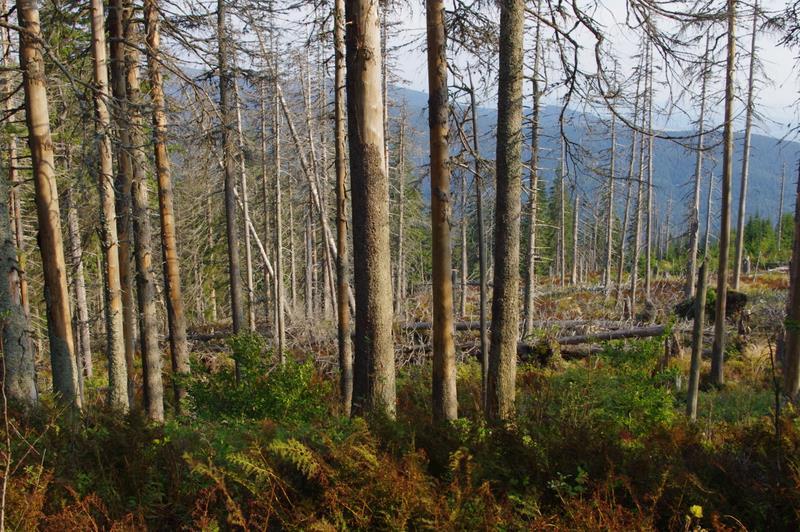 umarły las Romanka