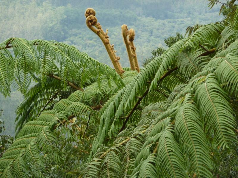Gigantyczne paprocie, pastorały Sri Lanka Równiny Hortona