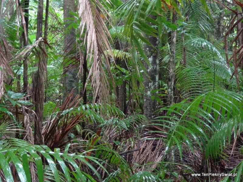 deszczowe lasy równikowe