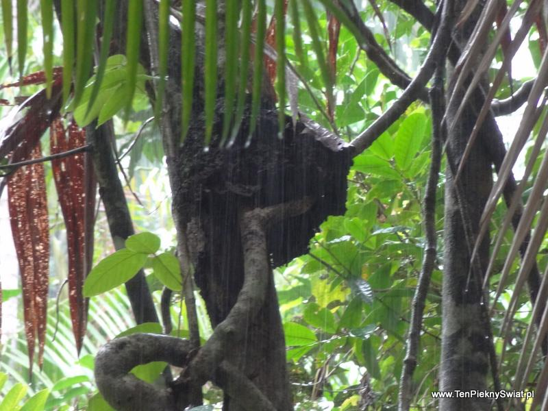 dżungla w deszczu