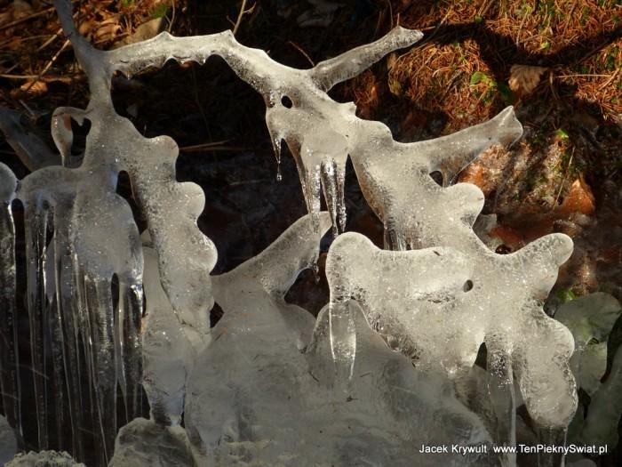 lodowe gałązki
