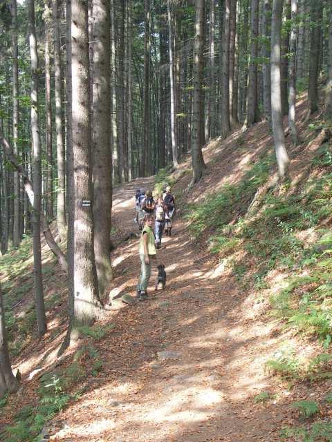 W stronę Lipowskiej zielonym szlakiem